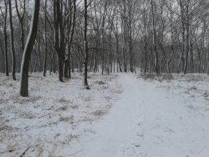 Кагарлик-Кагарлык-Kaharlyk-Парк