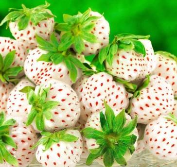 белоплодной клубники